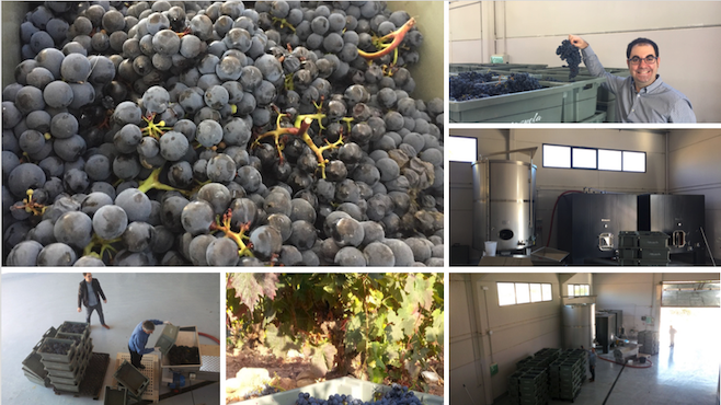 OSMO DOCA Rioja wine. Harvest and production. OSMO 2050